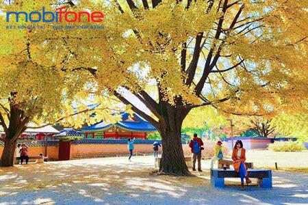 Du lịch hàn quốc với gói chuyển vùng quốc tế MobiFone giá rẻ